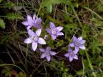 cvijece3