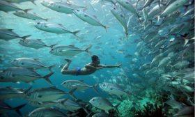 HUMAN-PLANET---Oceans-wat-007