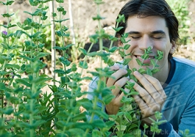 Man smelling herbs