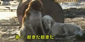 pas japan zemljotre