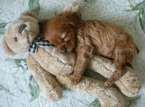 Dvoboj slika  Zagrljaj-malog-psa