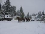 konji i snijeg