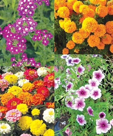 Mali savjeti za gajenje cvijeća na terasama, u baštama ili na prozorima – DUR...