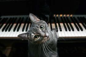 macka koja uziva i sviranju klavira