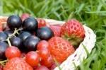Sočno bobičasto voće