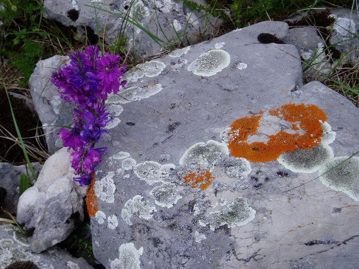 Kamen i cvet Cvijet-iy-kamena