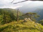 drveće iznad kanjona tare