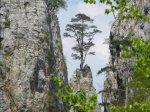 drvo iz kamena