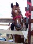 konj sa srcem na čelu