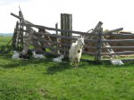 koza i 6 jarica