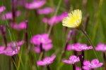 livada cvjetna