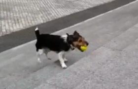 pas koji se igra