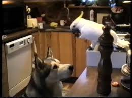 hrana za pse i macke