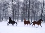 konji se igraju