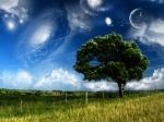 drvo nebo