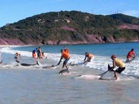 spasavanje delfina brzil
